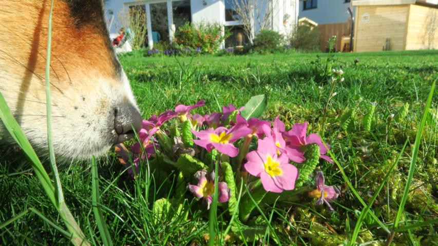 Alia – Stop And Smell The Primroses